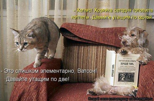 Свежая порция отличных котоматриц (25 шт)