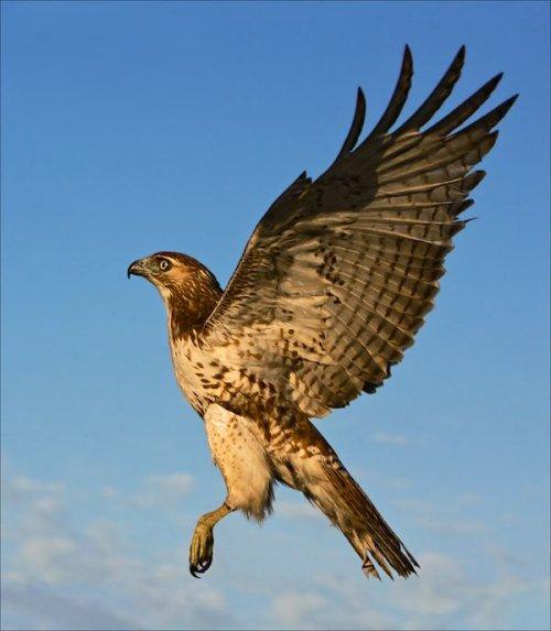 Топ-10: Птицы, которые вполне способны убить человека