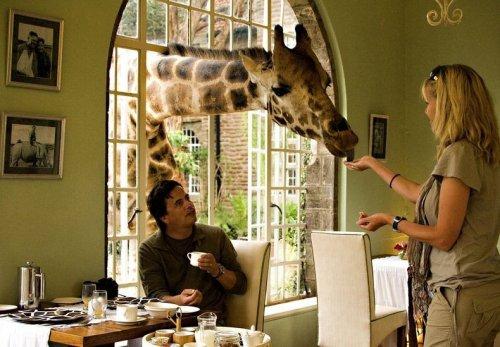Проведите ночь с жирафами в поместье жирафов в Найроби