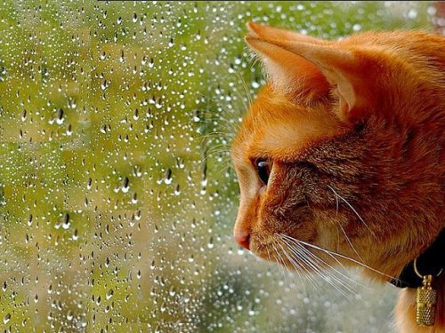 Фото кошек (19 шт)