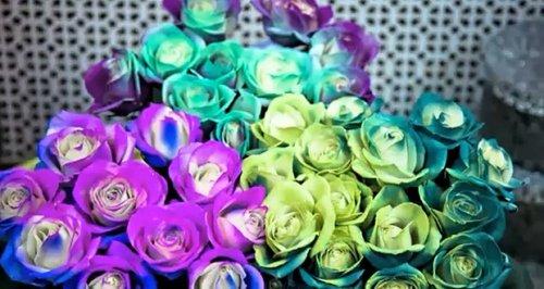 Розы, меняющие свой цвет в зависимости от температуры