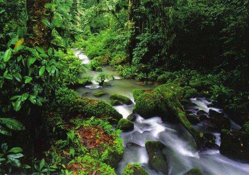 Великолепие тропической флоры (28 фото)