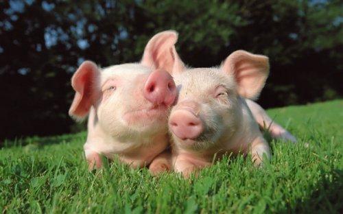 10 Распространенных заблуждений о животных