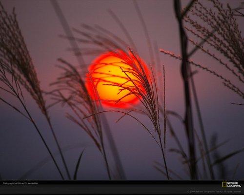 Краски жизни в фотографиях: оранжевый