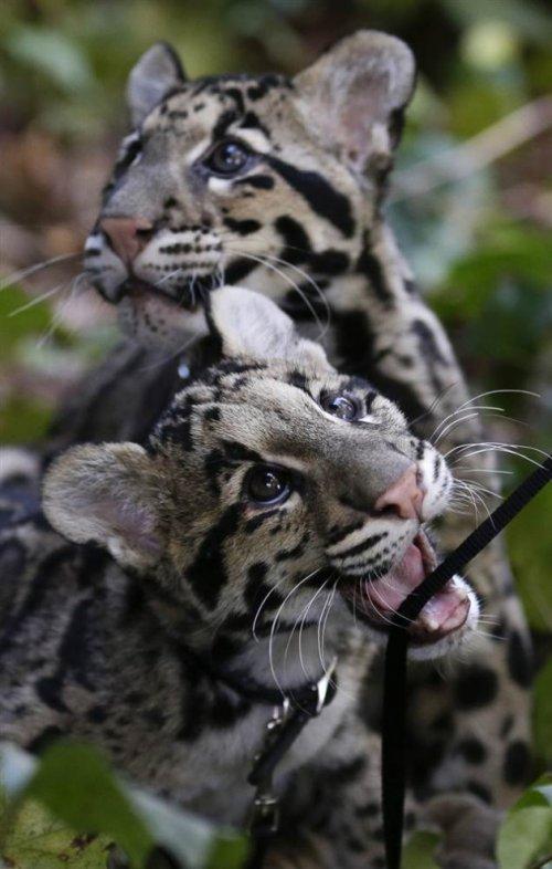 Лучшие снимки с животными за неделю (19 шт)