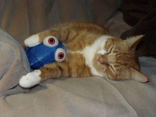 Котятки и их любимые мягкие игрушки (47 фото)