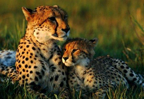 10 Пар животных, которых часто путают друг с другом