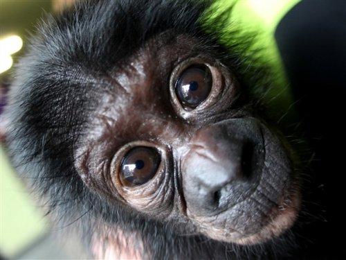 10 Способов, с помощью которых животные могли бы захватить власть над миром
