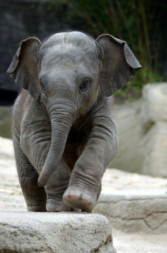 Смешные картинки слон, шишкой