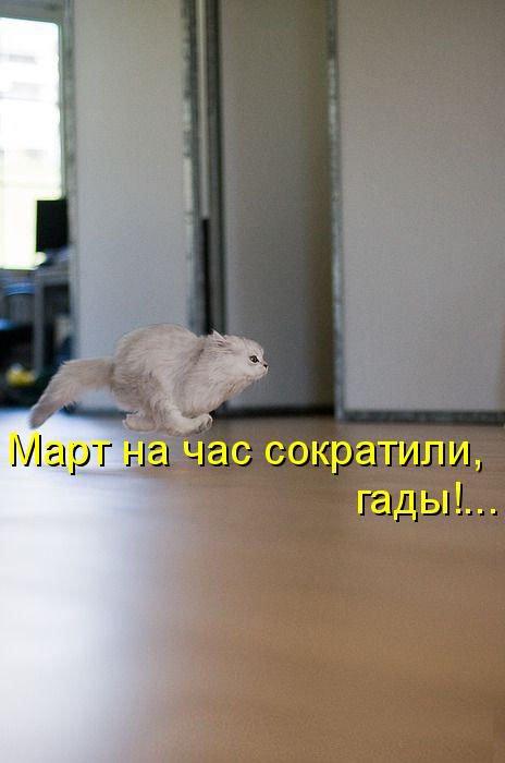 Умильные котэ и не только (17 фото)