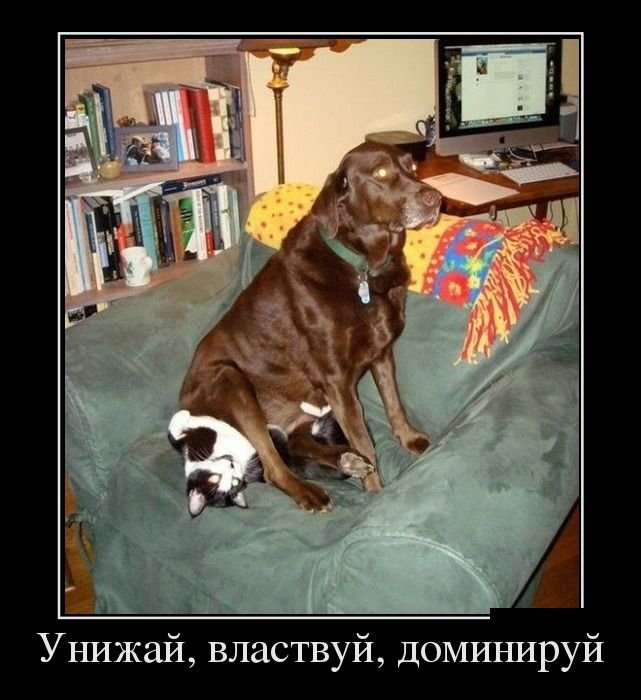 Собаки кошки демотиватор вылечить этот