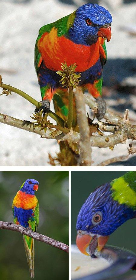Самые великолепные экзотические птицы (12 видов)