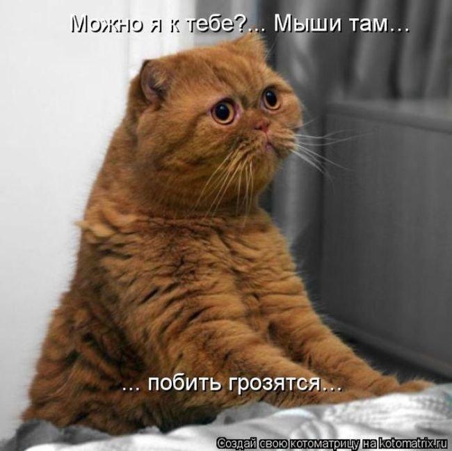 http://www.bugaga.ru/uploads/posts/2013-02/1361559359_novye-kotomatricy-31.jpg