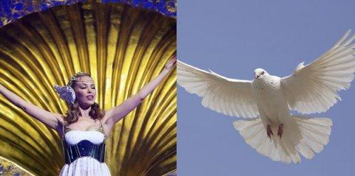 Фото-фантазия на тему Кем из птиц могли бы быть звезды (15 фото)
