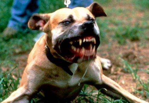 Шок видео: голодные псы нападают на ребенка