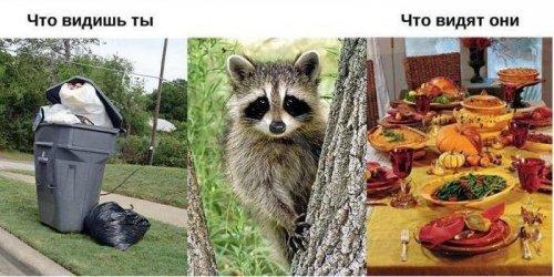 Человеческий мир глазами животных (11 фото)