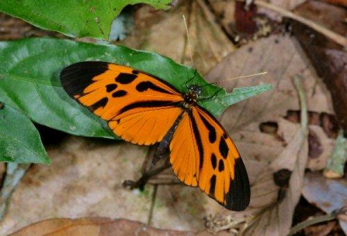 10 Важнейших эволюционных открытий, сделанных за последнее время