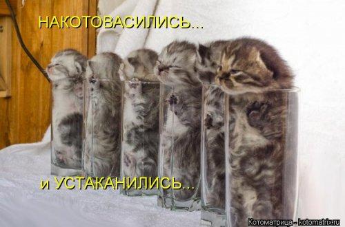 Свежие котоматрицы (22 шт)