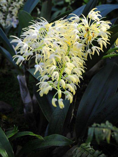 Орхидеи на фестивале фруктовых садов в Королевских ботанических садах Кью (12 фото)