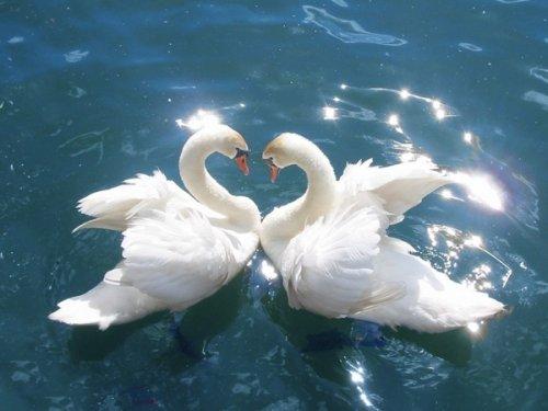 10 Теорий о происхождении сердца Святого Валентина