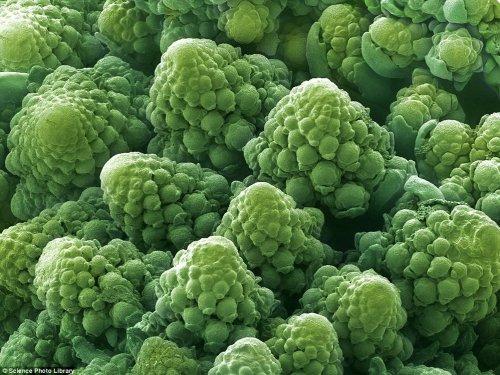 Макрофотографии продуктов питания (13 шт)