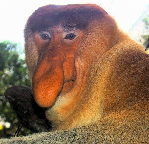 Долгопят - самая маленькая обезьянка в мире живет на острове суматра (и где то поблизости )) и очень