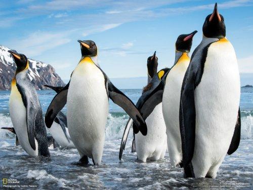 Лучшие фотографии недели от National Geographic (7 шт)