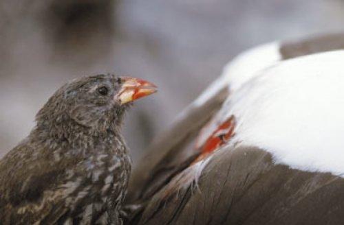 10 Поразительно жутких и кровожадных птиц