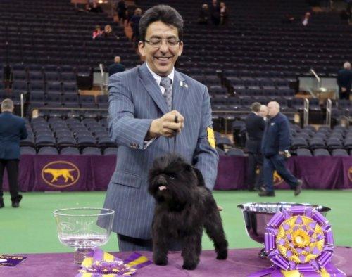 Победитель и участники дог-шоу Westminster Kennel Club Dog Show 2013 (30 фото)