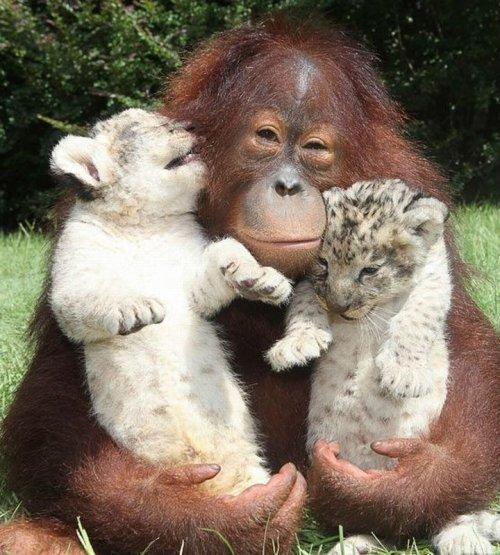 В мире животных (34 фото)