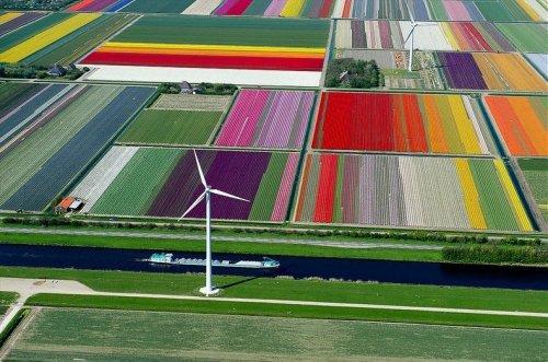 Аэрофотоснимки тюльпановых полей от Нормана Шкопа
