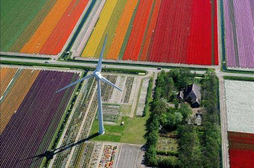 Аэрофотоснимки тюльпановых полей от Нормана Шкопа (9 фото)