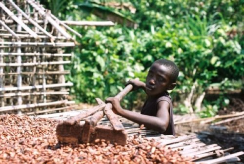 chocolate industry essay Read this essay on slavery in the chocolate industry come browse our large digital warehouse of free sample essays get the knowledge you need in order to pass your classes and more.