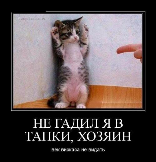 Демотиваторы не баяны! (17 шт)