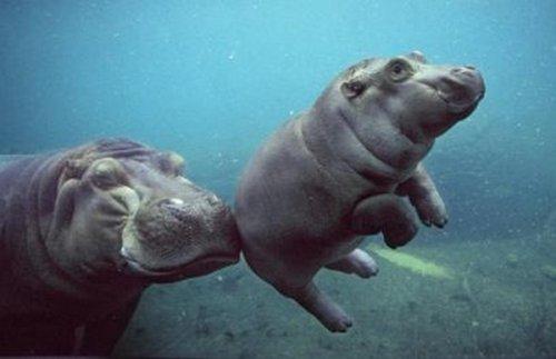 Милейшие животные, которым пришлось нелегко в детстве
