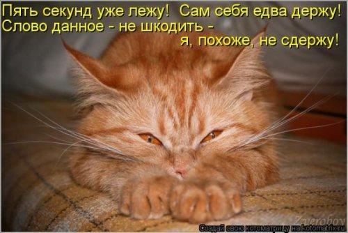 Коллекция новых котоматриц (32 шт)