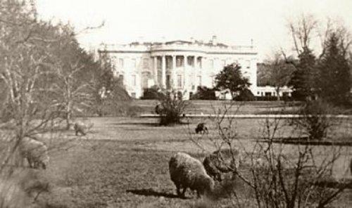 10 Самых странных животных, которые когда-либо жили в Белом Доме
