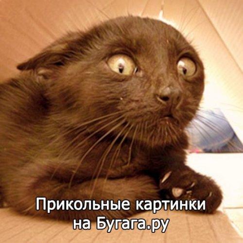 Прикольные картинки на Бугага.ру (60 шт)