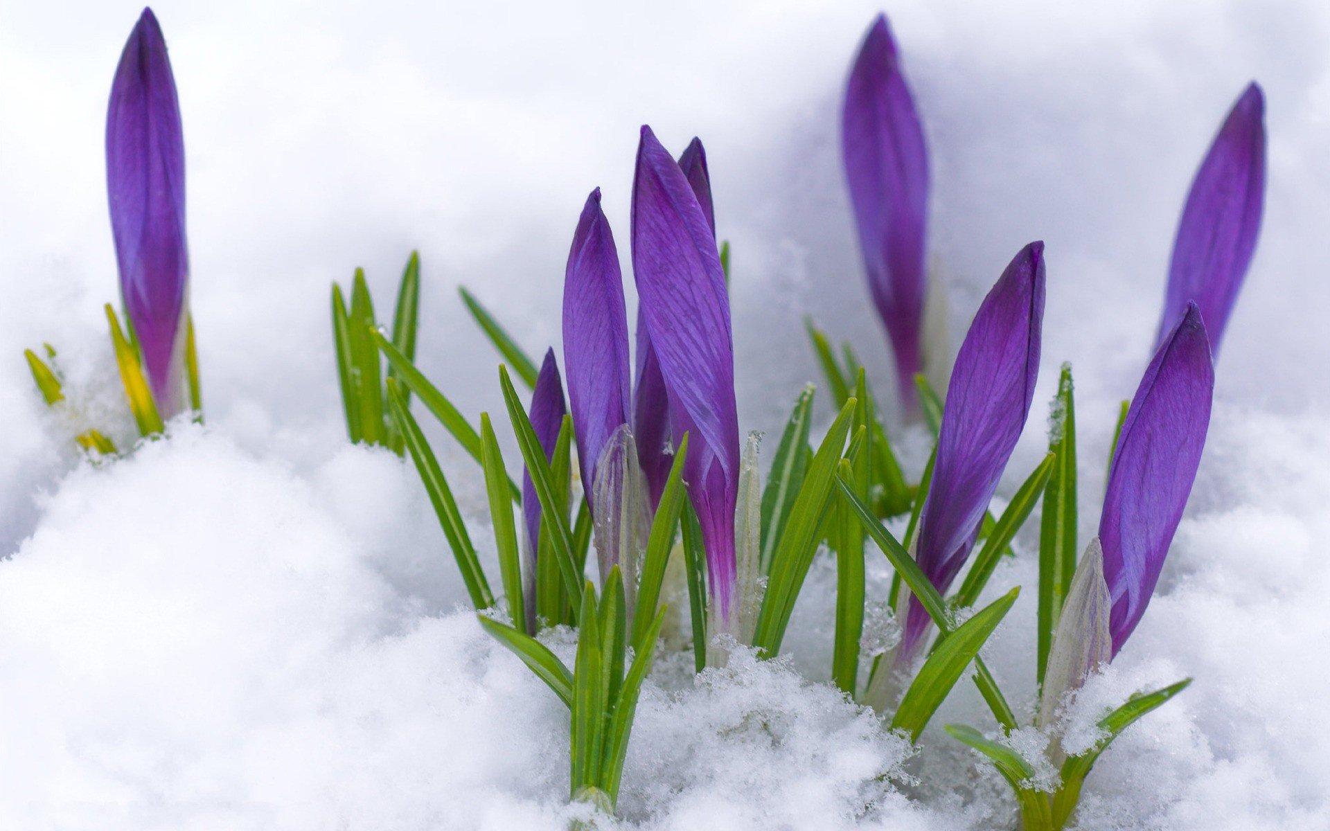 особенность такого фотообои на рабочий стол весна подснежники поэкспериментировать