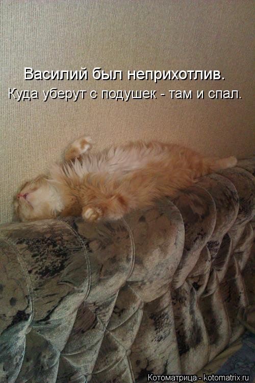 Котоматрица 1362086207_novye-kotomatricy-15