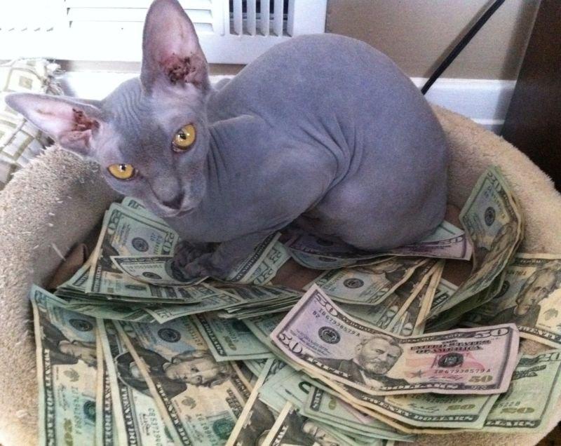 денежные фото приколы все