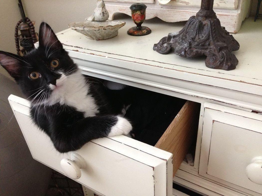 кошка в ящике картинки твою честь