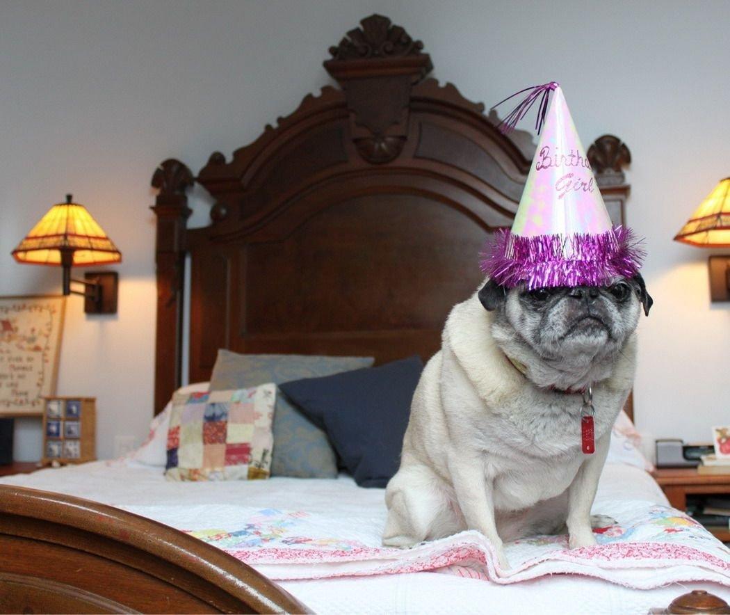 Прикольные картинки в день рождения с животными
