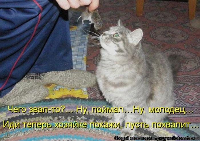 Картинки кепке, картинки смешных котят с подписями