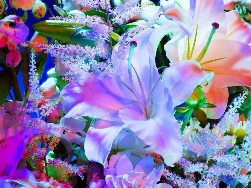 Красивые необычные цветы