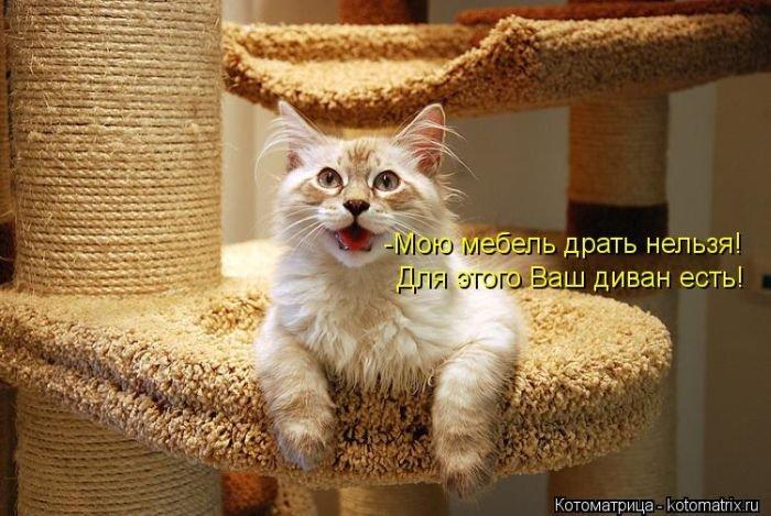 http://www.bugaga.ru/uploads/posts/2013-03/1364597203_novye-smeshnye-kotomatricy-8.jpg
