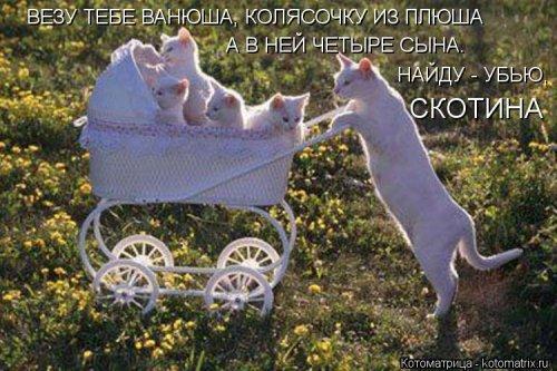 Котоматрица 1362086164_novye-kotomatricy-33