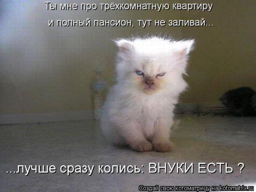 Котоматрица 1362086172_novye-kotomatricy-27