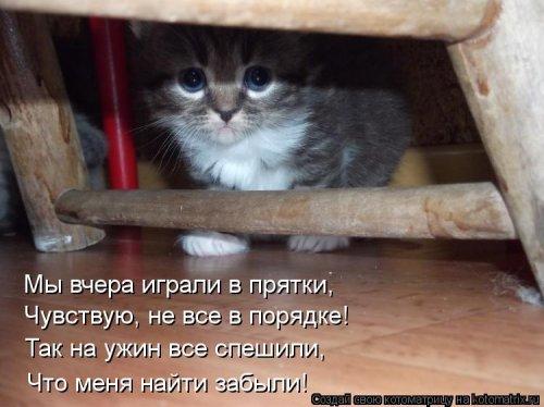 Котоматрица 1362086226_novye-kotomatricy-9