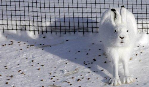 Лучшие фотографии недели с животными (18 шт)